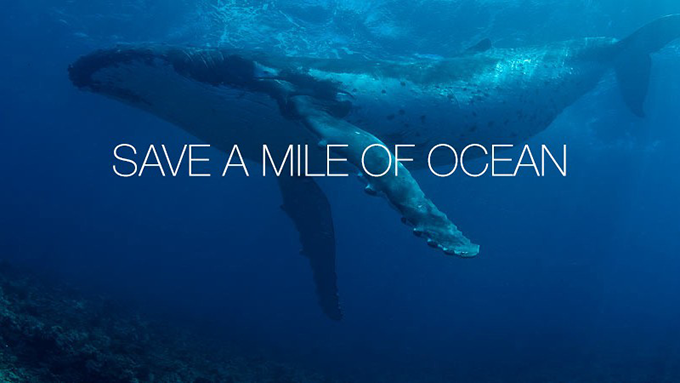 Local Real Estate Agency Launches New Charitable Program to Protect Endangered Oceans